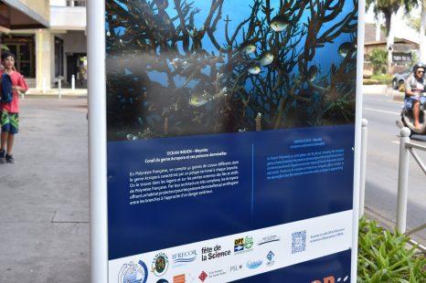 Les Récifs coralliens Objets d'Art et de Science